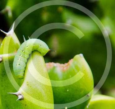 Lawn Grubs Removal London Ontario