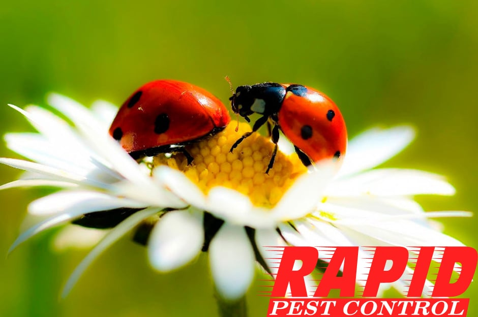 Lady Bug Control London Ontario – Ladybug Removal London Ontario