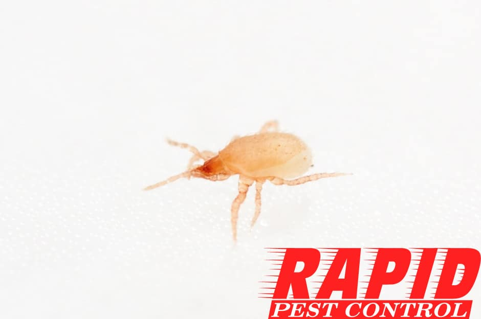 Mite Control London Ontario – Mite Removal London Ontario
