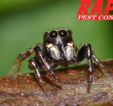 Spider Control London Ontario – Pest Control London Ontario