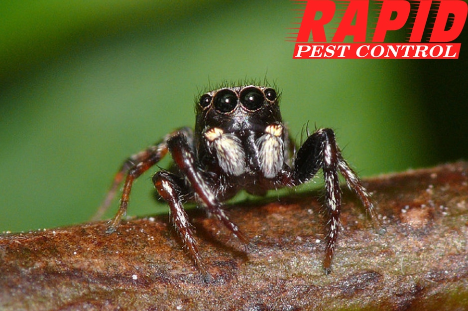Spider Control London Ontario – Spider Exterminator London Ontario