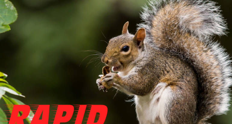 Squirrel Control London Ontario – Wildlife Removal London Ontario