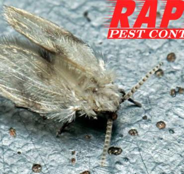 Drain Flies Control London Ontario – Drain Flies Removal London Ontario