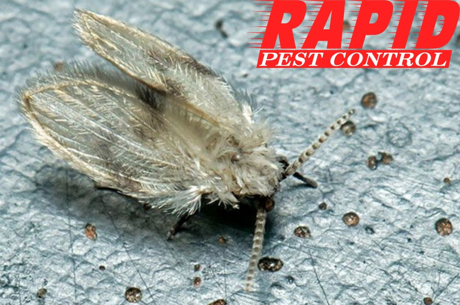 Drain Flies Control London Ontario – Drain Flies Removal London Ontario
