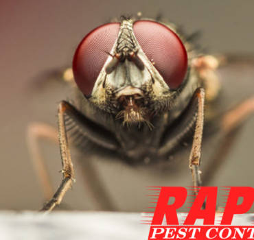 House Fly Control London Ontario