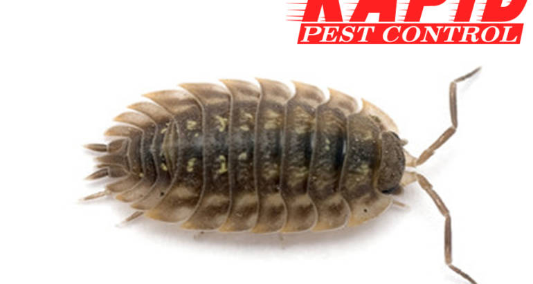 Sow Bugs Control London Ontario – Sow Bug Removal London Ontario