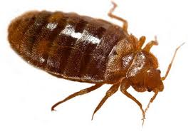 Interesting facts about Bed Bugs – London ontario pest control