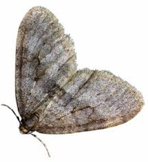 Moth Prevention – London Ontario Pest Control