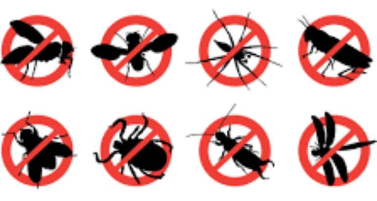 Pest control reducing numerous unwanted pests at home – London ON